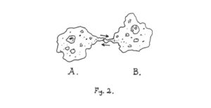 Intersubjective model of communication: amoeba sexuality